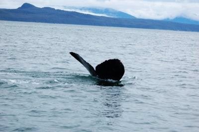 A whale tail above the water