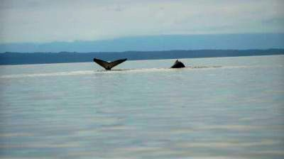 Whales spotted in Hoonah Alaska