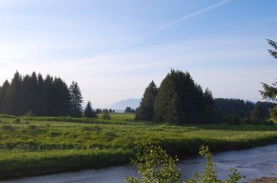 A lush, grassy field with trees in Alaska