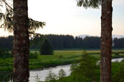 A lush, grassy field in Alaska