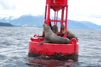 Sea lions perched on a red buoy