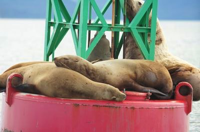 Sea lions sleep on a red and green buoy