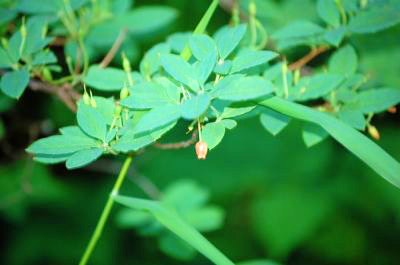 A closeup of an Alaskan plant
