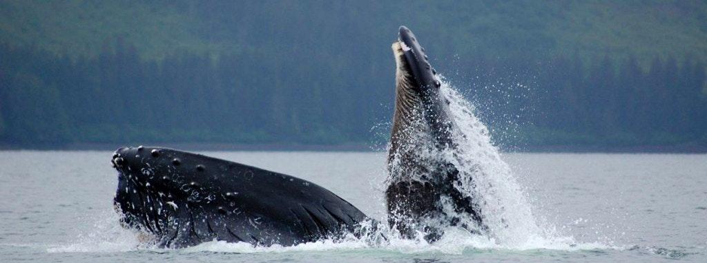 whale-ak-1024x382