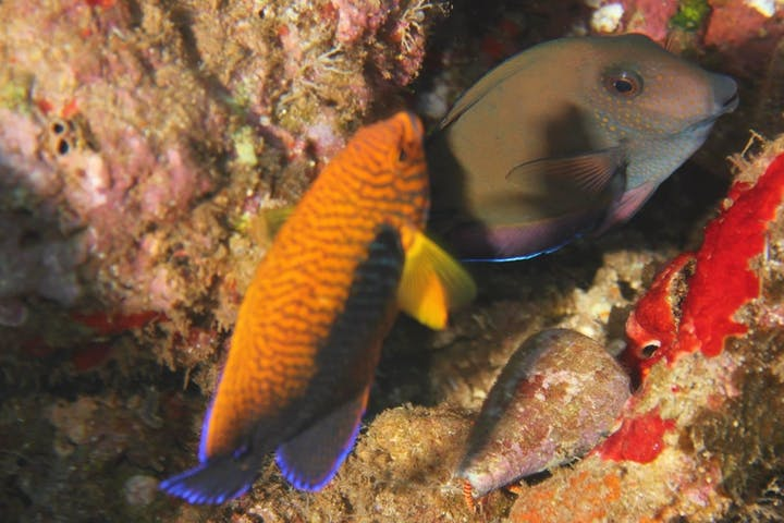 fish scuba