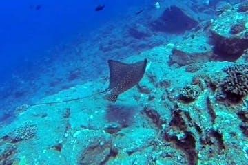 underwater stingray ocean scuba