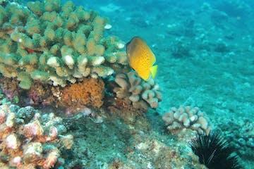scuba reef coral fish underwater ocean