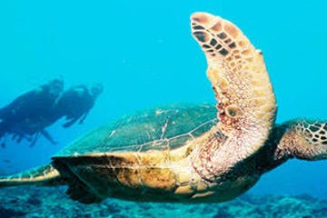 scuba divers turtle underwater