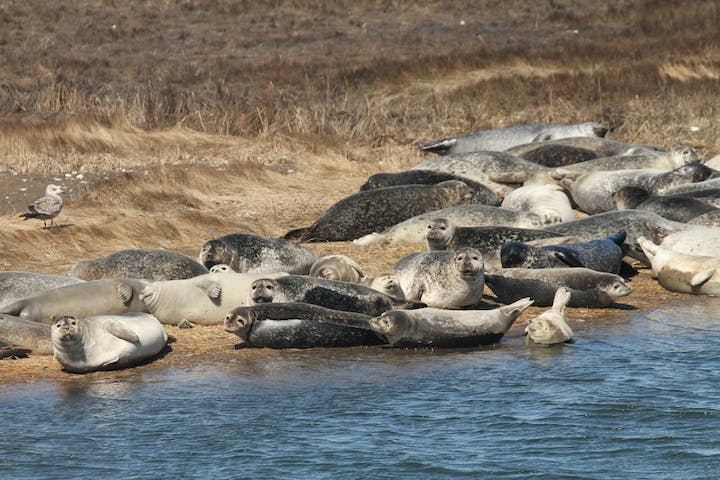 Seals lounging on the Long Island coast