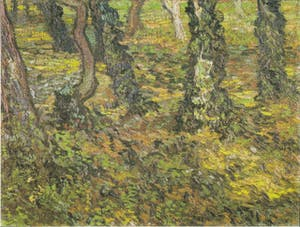 Tree Trunks with Ivy by Vincent van 1889Gogh