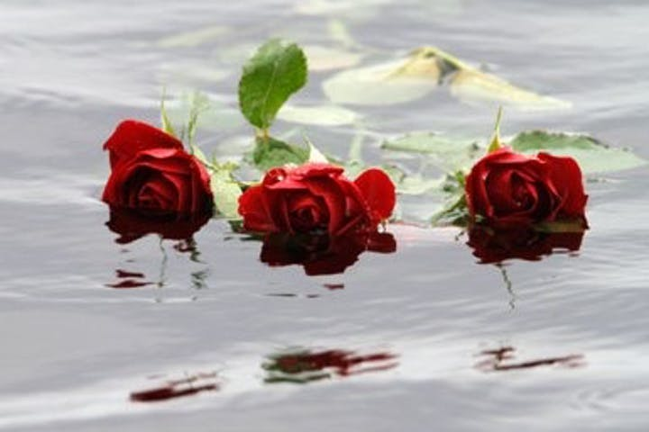Three roses floating in the water