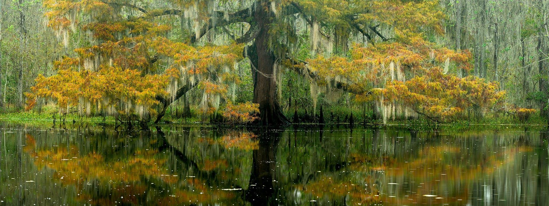 swamp landscape photography, swamp pjotography, new orleans landscape photography tour, swamp photo tour