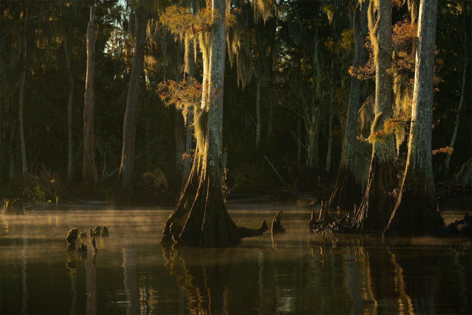 swamp tour, swamp landscape photo tour, swamp photography, landscape photo tour