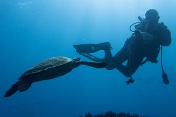 Diver swimming underwater with sea turtle
