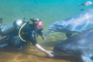 Dolphin Diving Experience - Hawaii