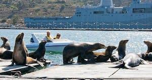 Speed boat near seals