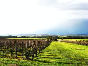 one of the fun things you can do in sydney is visit hunter valley