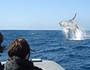 Some fun date ideas in San Diego include whale watching