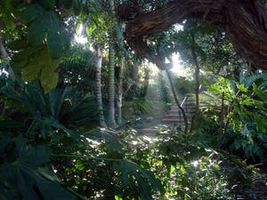 A photo of the sun peering through the trees in the San Diego meditation gardens