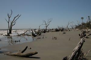 Best Beaches in Charleston - Bulls island