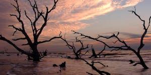 Best Beaches in Charleston - Bulls Beach