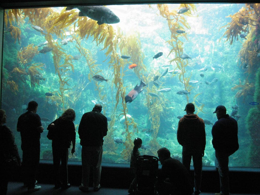 The Birch Aquarium is one of the top san diego attractions for kids