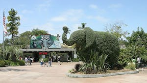 The San Diego Zoo is is one of the top san diego attractions for kids