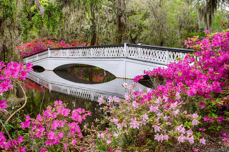 Magnolia Plantation and Gardens flowers