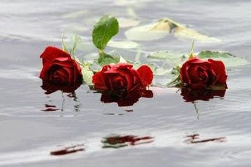 roses on water