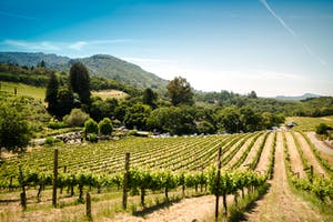 wine tours of napa and sonoma valley