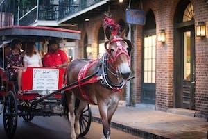 A horse-drawn carriage tour