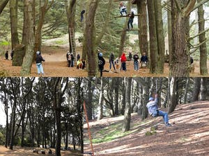 A ropes and obstacle course in the forest