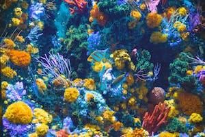 brightly colored aquarium with fish and corals of all colors