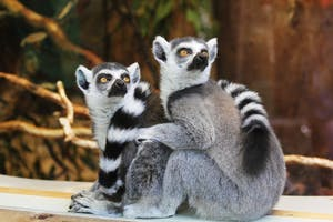 Cute Animals at Chicago's free Lincoln Park Zoo