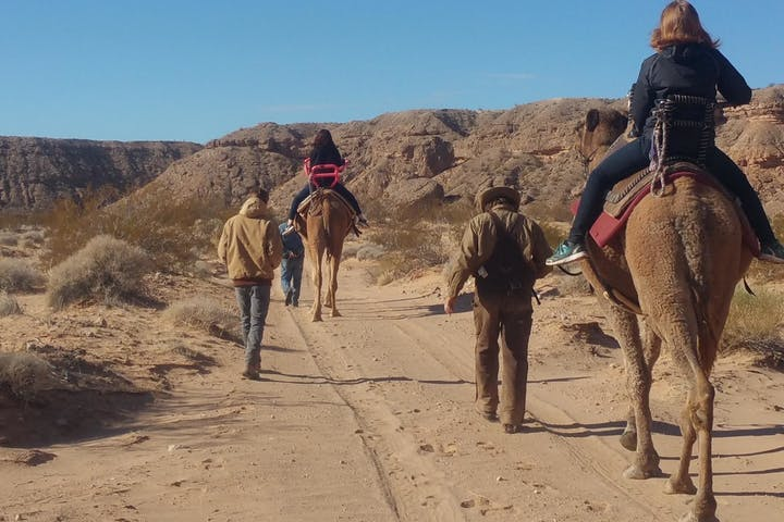 Two camels carrying riders through the Nevada desert