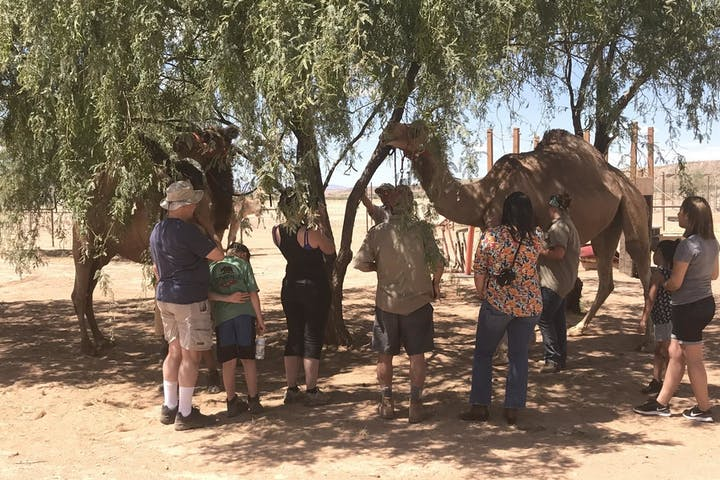 People petting two camels