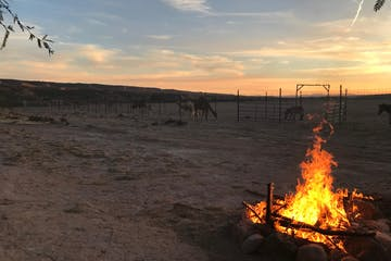 Bon fire at desk in the Nevada desert with camels and llamas in the background