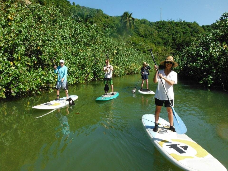 Paddle boarders exploring river inlets in Puerto Rico