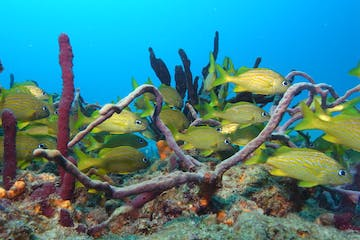 Underwater reef and marine life