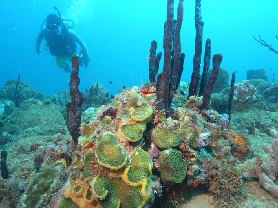 El Natural Beach scuba diver diving among coral reefs
