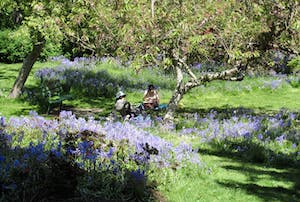 Beacon Hill Park in Spring