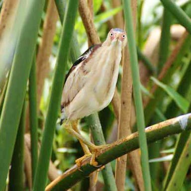 A bird perched in the reeds of the Florida Everglades