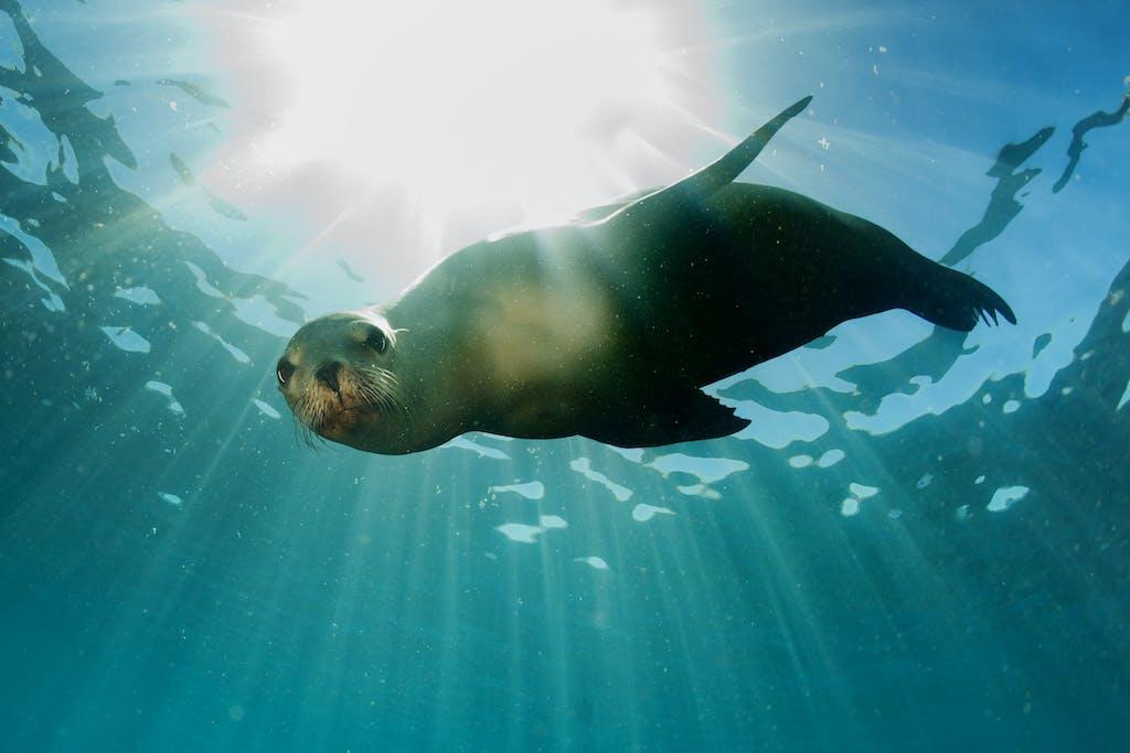 sea-lions-san-diego