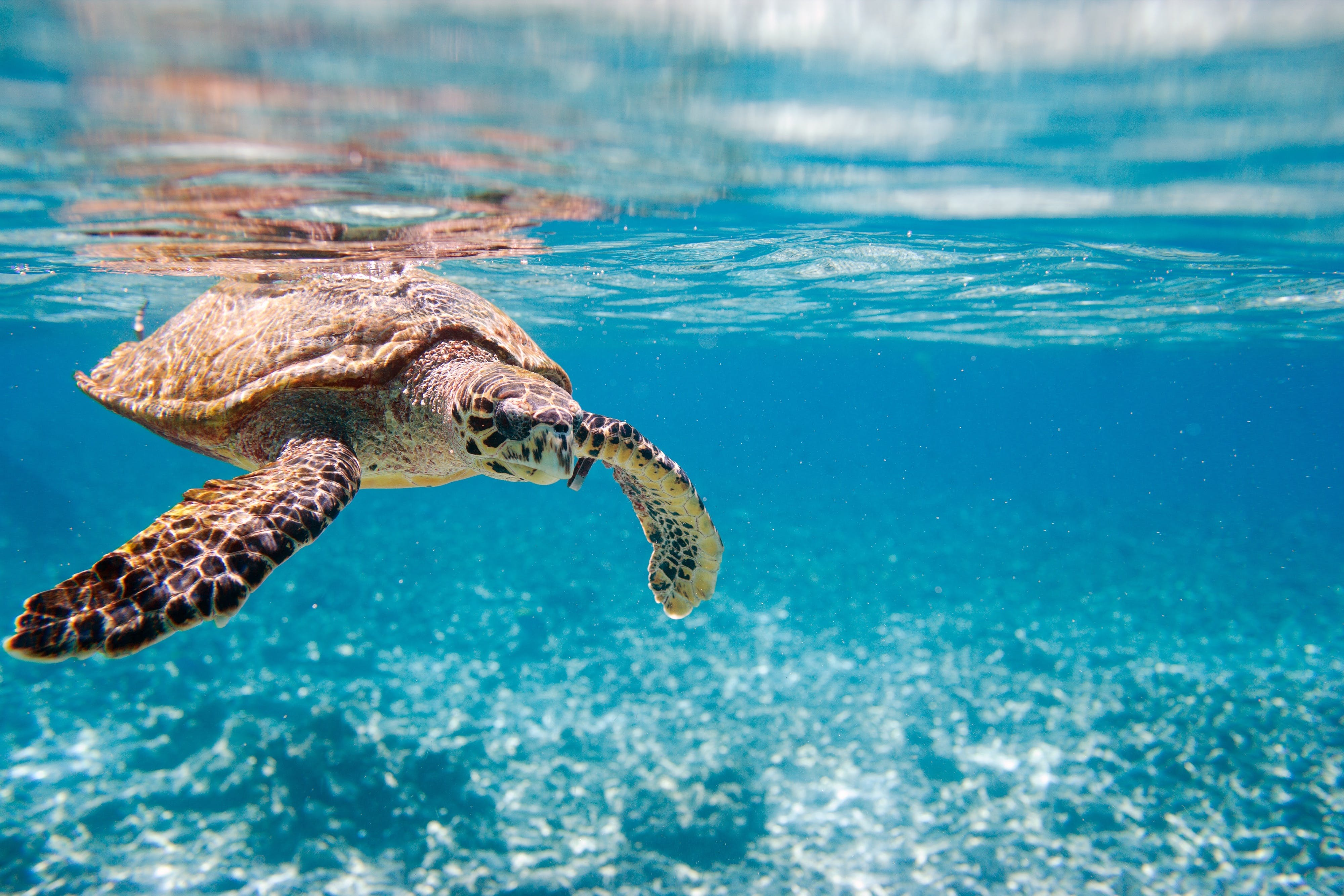 sea-turtles-while-whale-watching