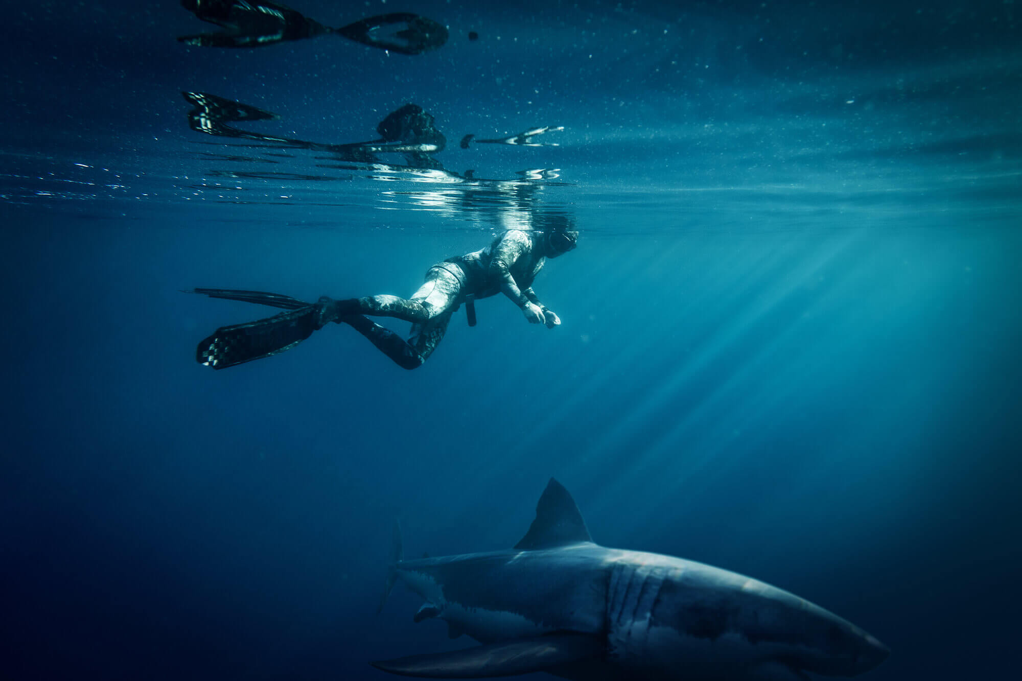 unique honeymoon ideas diving with sharks