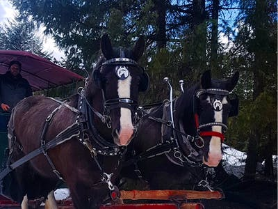2 horses pulling a sleigh