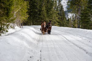 horse drawn sleigh on Whistler