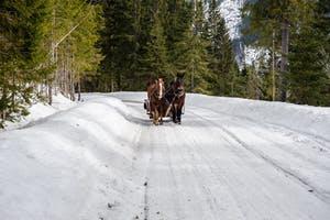 horse drawn sleigh on Whistler