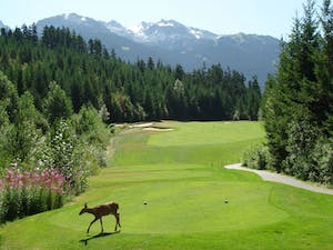 Fairmont Whistler Golf Course