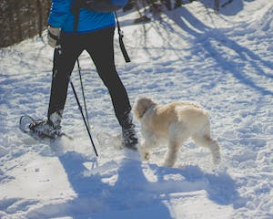 a man and his dog snowshoe in winter